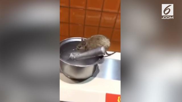 Seekor tikus tertangkap kamera minum di atas meja dapur restoran di China. Pemilik restoran menduga tikur terjatuh saat pengendalian hama dilakukan.
