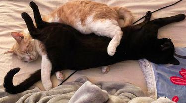 8 Potret Menggemaskan Kucing-Kucing yang Dipelihara Bersama