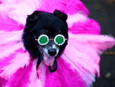 Anjing-Anjing Berkostum Kece Mejeng di Parade Halloween