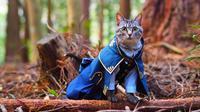 Kucing berkostum cosplay. Sumber: Twitter/YagyouNEKO