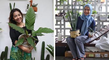 Tika Akmar (foto kiri) dan Swastika Nohara memperlihatkan koleksi tanaman hias di kediaman masing-masing, Rabu (15/07/2020). Mengoleksi dan merawat beragam tanaman hias menjadi hobi baru untuk mengisi waktu luang serta membuang kejenuhan pada masa pandemi COVID-19. (Liputan6.com/Herman Zakharia)