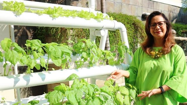 Segarnya Kebun Hidroponik Di Rumah Memes Hijau Di Mana Mana