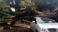 Sebuah mobil tertimpa pohon besar yang tumbang saat angin kencang menyertai hujan lebat di Kota Malang (Liputan6.com/Zainul Arifin)