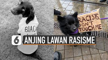 Saat ini aksi melawan rasisme sedang sering dilakukan. Tetapi tidak hanya manusia saja yang melawan rasisme. Hewanpun juga ikut, seperti anjing-anjing ini.