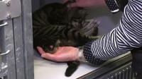 Kucing berkaki lima buat heboh warga. Seperti apa rupanya?