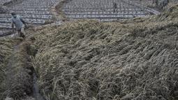 Seorang warga memeriksa lahan pertanian yang terdampak letusan Gunung Semeru di Lumajang, Provinsi Jawa Timur (3/12/2020). PVMBG Badan Geologi Kementerian ESDM merekomendasikan, masyarakat tidak melakukan aktivitas di dalam radius 1 kilometer. (AFP/Juni Kriswanto)