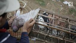 Warga sedang memeriksa sayap merpati kolongan di kawasan Menteng Pulo Jakarta, Minggu (4/3). Setiap akhir pekan komunitas merpati kolongan memanfaatkan waktu untuki ajang persiapan kejuaraan. (Liputan6.com/Faizal Fanani)