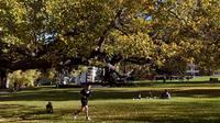 Seorang pria berolahraga di dalam taman kota di Melbourne, Australia (3/6/2021). Pihak berwenang mengumumkan Lockdown di Melbourne diperpanjang tujuh hari lagi ketika negara itu berusaha untuk membasmi sekelompok kasus Covid-19 di Melbourne. (AFP Photo/William West)