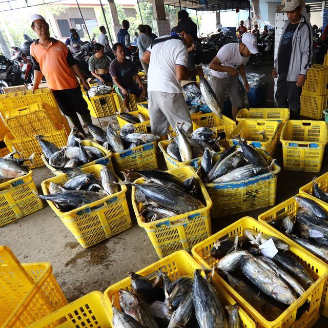 Jenis Ikan Laut Yang Bisa Dikonsumsi Enak Dan Menyehatkan Citizen6 Liputan6 Com