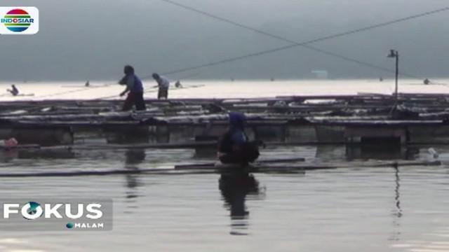 Fenomena ikan mabuk ini terjadi sejak Rabu malam yang ditandai dengan ratusan bahkan ribuan ekor ikan tampak mengambang di permukaan danau.