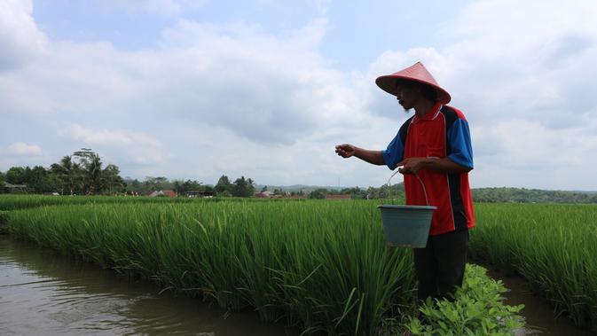 Menikmati Pagi Bersama Petani Minapadi di Lereng Gunung Slamet - Regional  Liputan6.com
