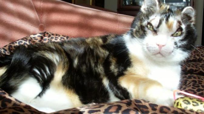 Scarlett Kucing Pemberani Yang Selamatkan Anaknya Dari Kebakaran Citizen6 Liputan6 Com