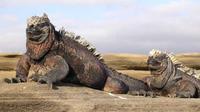 Iguana laut di Kepulauan Galapagos. (Creative Commons)