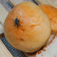ilustrasi lalat hingga di makanan/photo copyright by Shutterstock