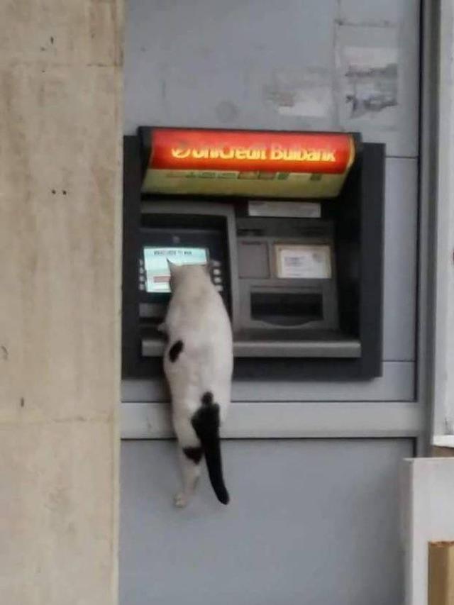 5Tingkah Kocak Kucing Miliki Kecerdasan Tinggi
