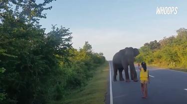 Gajah yang tadinya akan masuk pemukiman warga langsung pergi saat mendapat isyarat sang anak.