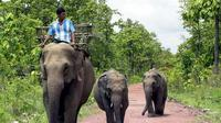 Ilustrasi gajah (AFP)
