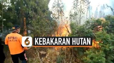 Sempat berhasil dipadamkan, hutan di Gunung Semeru, Jawa Timur, kembali terbakar.