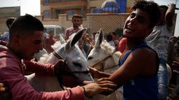Peserta mempersiapkan keledainya untuk ambil bagian dalam lomba balap keledai di desa Al-Baragel, luar Kairo, Jumat (28/9). Sebanyak 35 keledai berpartisipasi dalam kompetisi tahunan yang berhadiah 5000 EGP atau sekitar 4 juta rupiah. (AP/Amr Nabil)