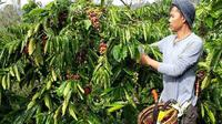 Aktifitas petani di Kota Pagar Alam Sumsel (Liputan6.com / Nefri Inge)