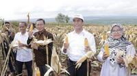 Menteri Pertanian Andi Amran Sulaiman menyaksikan banjir jagung di Kabupaten Tuban, Jawa Timur sekaligus melalukan panen raya di Desa Talun, Kecamatan Montong.