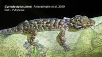Penemuan Spesies Endemik Baru Reptil di Taman Nasional Bali Barat. foto: dok. Kementerian LHK.