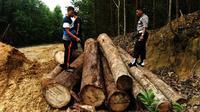 Aparat Polda Riau membongkar illegal logging atau pembalakan liar di kawasan hutan lindung Rimbang Baling, Kabupaten Kuantan Singingi. (Liputan6.com/M Syukur)