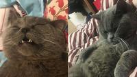 Kucing Xiaopi (Sumber: Worldofbuzz)