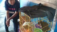 Kucing hitam berhasil diselamatkan setelah terjebak sekitar delapan jam di bangunan Pasar Legi Solo yang terbakar, Selasa (30/10/2018). (Solopos/Chrisna Canis Cara)