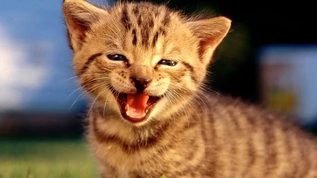 7 Meme Obrolan Kucing Lucu Saat Pdkt Bikin Senyum Senyum Sendiri Ragam Bola Com