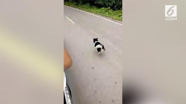Seekor anjing mengejar jenazah majikannya yang akan dimakamkan. Aksi ini mengundang haru dari warganet.