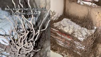 Viral Penampakan Sarang Rayap Bak Hutan Dalam Lemari, Bikin Merinding Warganet