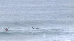 Pada potongan video menunjukkan paus pembunuh (orca) melewati peselancar Afsel, Shanon Ainsle di tengah kejuaraan selancar di Unstad, Norwegia, Sabtu (23/9). Untungnya, kedua paus itu tetap tenang dan tidak agresif. (HO/LOFOTEN MASTERS 2017/AFP)