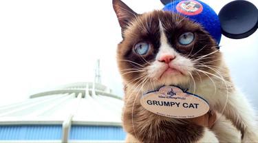 15 Inspirasi Nama Kucing Peliharaan Diambil Dari Kartun Disney Lifestyle Fimela Com