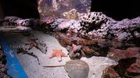 Jakarta Aquarium, adalah tempat wisata kekinian yang memberikan suasana berbeda di mal. (Liputan6.com/Pool/Jakarta Aquarium)