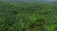 ISPO kembali menyerahkan sertifikat kepada 40 perusahaan kelapa sawit di Indonesia 5 diantaranya dikantongi anak perusahaan Astra Agro. (Foto: Astra Agro)