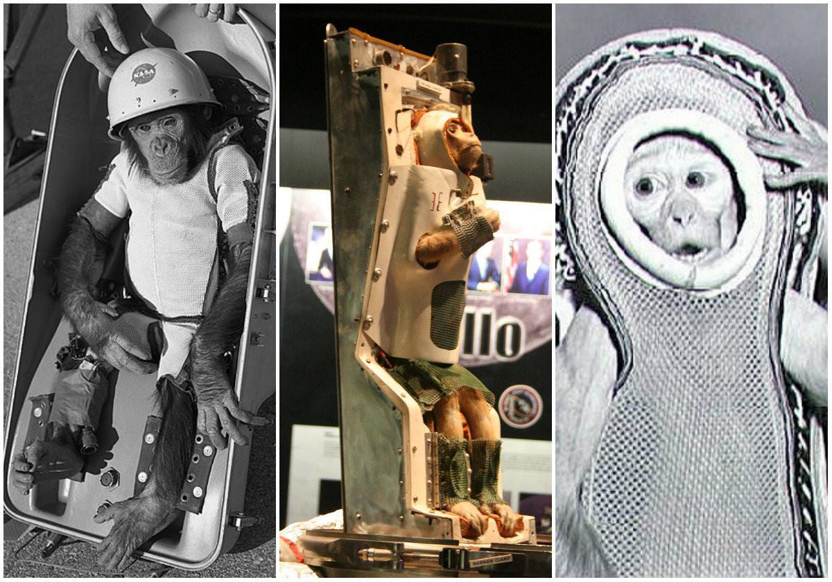 Para astronot hewan: simpanse Ham, serta monyet bernama Able dan Sam (Wikipedia/Public Domain/NASA)
