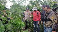 Tim Polres Lahat menemukan ladang ganja di perkebunan kopi di Kabupaten Lahat Sumsel (Dok. Humas Polres Lahat / Nefri Inge)