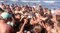 Nahas, Lumba-lumba Mati Setelah Dipaksa Selfie oleh Puluhan Turis (Hernan Coria/BBC)
