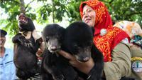 Tiga bayi beruang mungil jadi penghuni baru di BBKSDA Riau. (Liputan6.com/M Syukur)