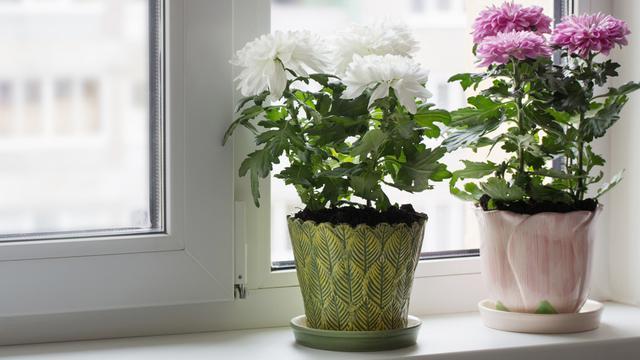 10 Jenis Tanaman Hias Bunga Dalam Pot Mudah Merawatnya Hot Liputan6 Com