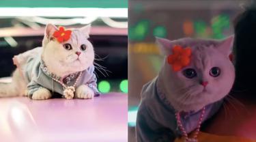 Potret Gemas Mao Mao, Model Kucing yang Dapat Upah Hingga Rp 22 Juta Sekali Tampil