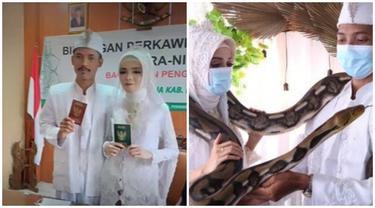 Viral Pasangan Menikah dengan Mas Kawin Ular Piton, Sempat Ditolak Keluarga