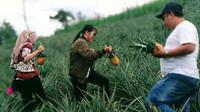Anda pernah liburan ke perkebunan nanas terluas di dunia? Yang memiliki konsep back to nature? Jika belum, baiknya Anda agendakan liburan ke Desa Onan Runggu 1, Kecamatan Sipahutar, Tapanuli Utara.