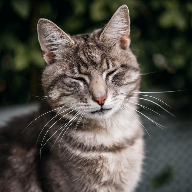 3 Ciri-Ciri Rabies pada Kucing, Kenali Gejala dan Penyebabnya - Hot Liputan6.com