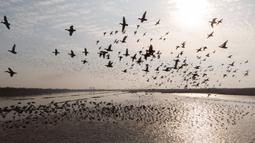 Foto udara menunjukkan kawanan burung migran terbang di atas Danau Dongting Barat di Changde, Provinsi Hunan, China, 11 November 2020. Sekitar 20.000 ekor burung migran telah tiba di Danau Dongting Barat tahun ini. (Xinhua/Chen Sihan)