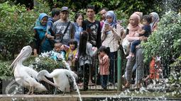 Sejumlah pengunjung melihat burung Pelikan di Kebun Binatang Ragunan, Jakarta Selatan, Senin (12/12). Libur Maulid Nabi Muhammad SAW, Kebun Binatang Ragunan diserbu warga yang ingin menikmati waktu libur bersama keluarga. (Liputan6.com/Yoppy Renato)