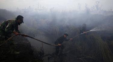 Anggota TNI memadamkan api di perkebunan kelapa sawit di Desa Padamaran, Ogan Komering Ilir , Sumatera Selatan, Sabtu (12/9/2015). Kebakaran lahan menyebabkan kabut asap di sejumlah wilayah dan mengganggu jadwal penerbangan. (REUTERS/Beawiharta)