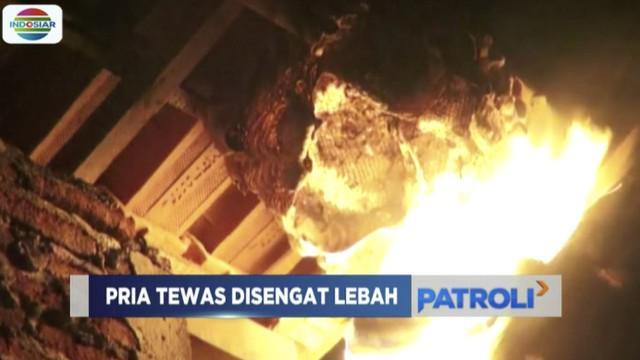 Sorang pria di Wonosari, Semarang, tewas usai disengat lebah hutan saat mencoba hancurkan sarang yang menempel di rumahnya.