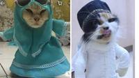 Kelakuan 8 Kucing Pakai Baju Koko Ini Lucunya Kebangetan (sumber: Twitter.com/subtanyarl dan Twitter.com/thisisschnylwfe)
